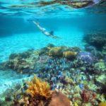 Cms_cozumel_inline_snorkeling