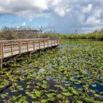 Everglades National Park 1129x752.jpg.optimal