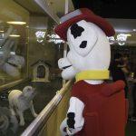 Inauguração Animal Pet (1)