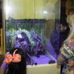 Inauguração Animal Pet (29)