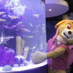 Inauguração Animal Pet (7)