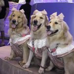 Inauguração Animal Pet (8)