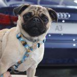 Feijoaudi 19 150x150 - Audi Center Fortaleza recebe clientes com feijoada