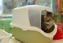 Adoção De Pets Na Mundo Pet