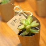 Lançamento Bs Flower (3)